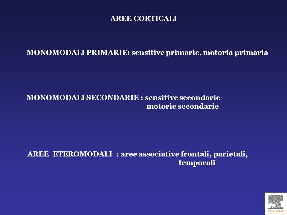 AREE ASSOCIATIVE ETEROMODALI CORTECCIA PREFRONTALE CORTECCIA PARIETALE POSTEROINFERIORE CORTECCIA TEMPORALE LATERALE GIRO PARAIPPOCAMPALE convergenza di tutti gli stimoli dalle aree unimodali controllo sistema limbico e centri sottocorticali