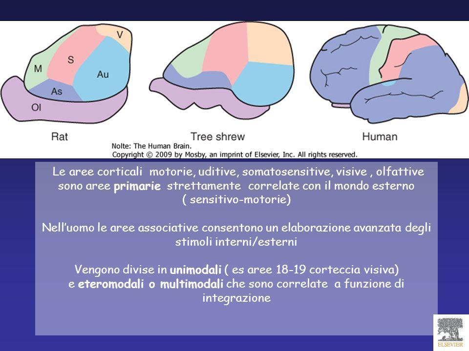Le aree corticali motorie, uditive, somatosensitive, visive, olfattive sono aree primarie strettamente correlate con il mondo esterno ( sensitivo-moto
