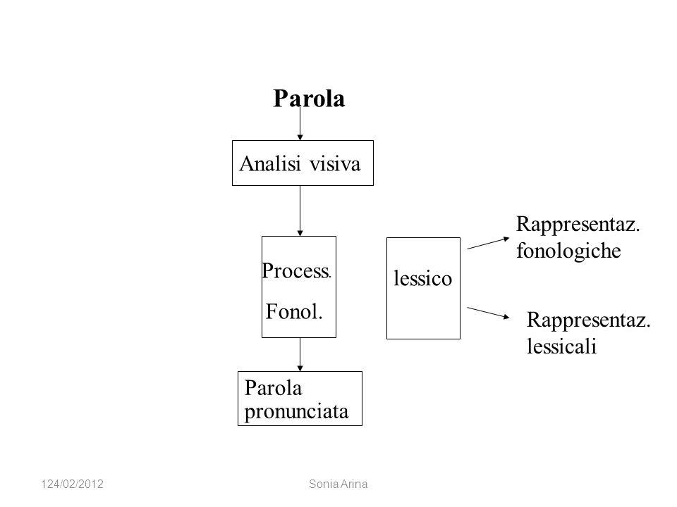 lessico Analisi visiva Process. Fonol. Parola pronunciata Parola Rappresentaz. fonologiche Rappresentaz. lessicali 124/02/2012Sonia Arina