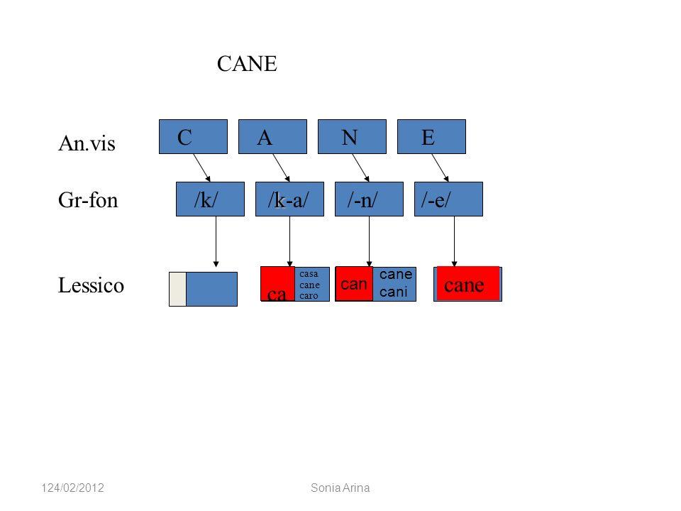 C /k/ A /k-a/ N E /-n/ /-e/ cane CANE casa cane caro ca An.vis Gr-fon Lessico can cane cani 124/02/2012Sonia Arina