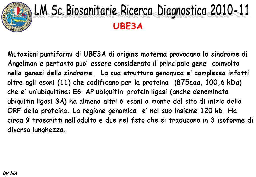By NA Mutazioni puntiformi di UBE3A di origine materna provocano la sindrome di Angelman e pertanto puo essere considerato il principale gene coinvolt