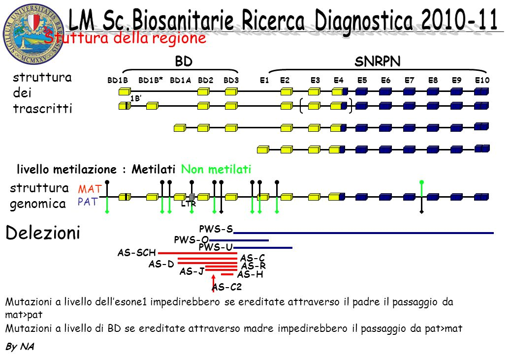 By NA BD1B BD1B* BD1A BD2 BD3 E1 E2 E3 E4 E5 E6 E7 E8 E9 E10 BDSNRPN livello metilazione : Metilati Non metilati MAT PAT 1B LTR PWS-S PWS-O PWS-U stru
