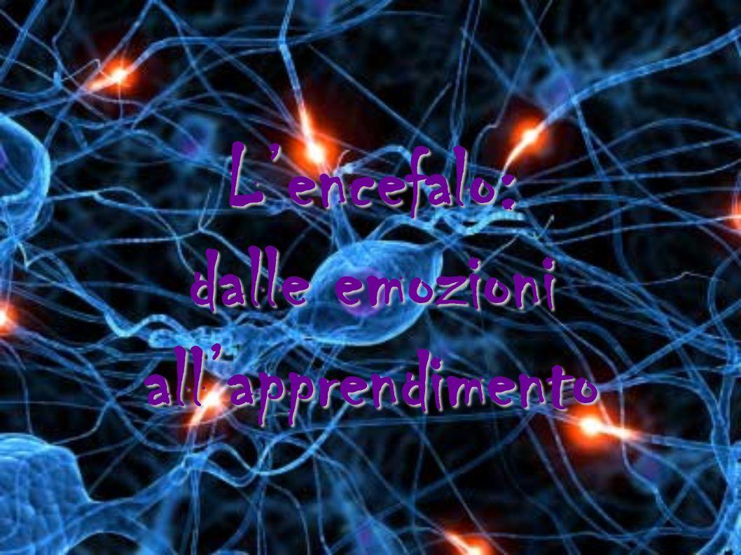 Lencefalo: dalle emozioni allapprendimento