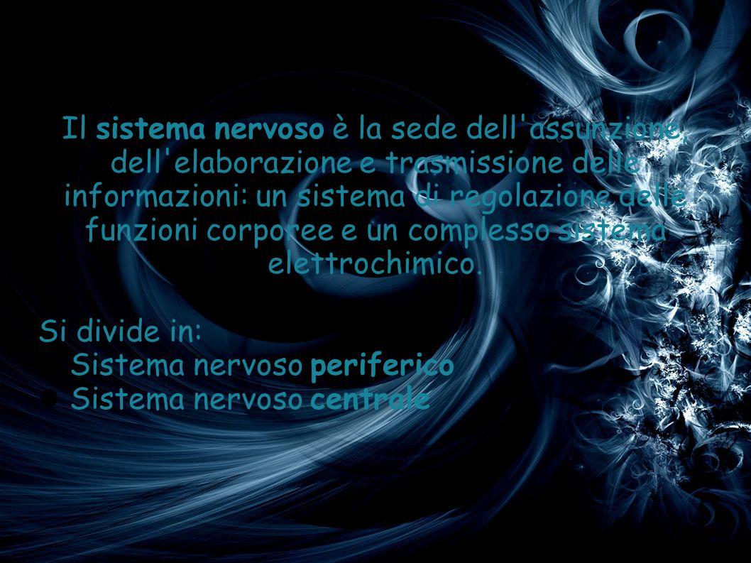 Il sistema nervoso è la sede dell'assunzione, dell'elaborazione e trasmissione delle informazioni: un sistema di regolazione delle funzioni corporee e