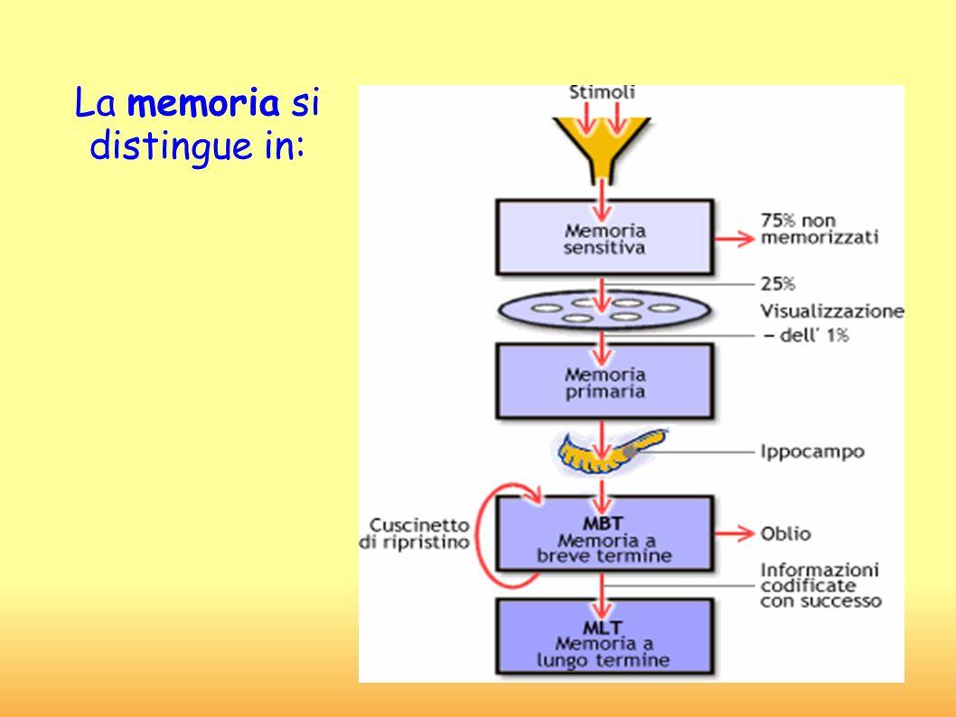 La memoria si distingue in: