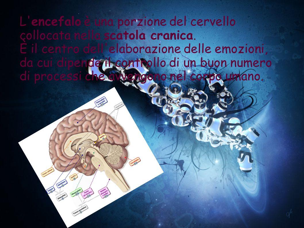 L'encefalo è una porzione del cervello collocata nella scatola cranica. È il centro dell'elaborazione delle emozioni, da cui dipende il controllo di u