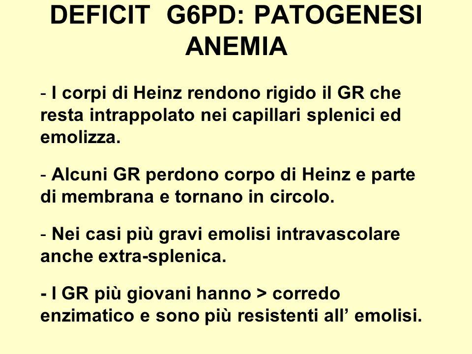 DEFICIT G6PD: PATOGENESI ANEMIA - I corpi di Heinz rendono rigido il GR che resta intrappolato nei capillari splenici ed emolizza. - Alcuni GR perdono