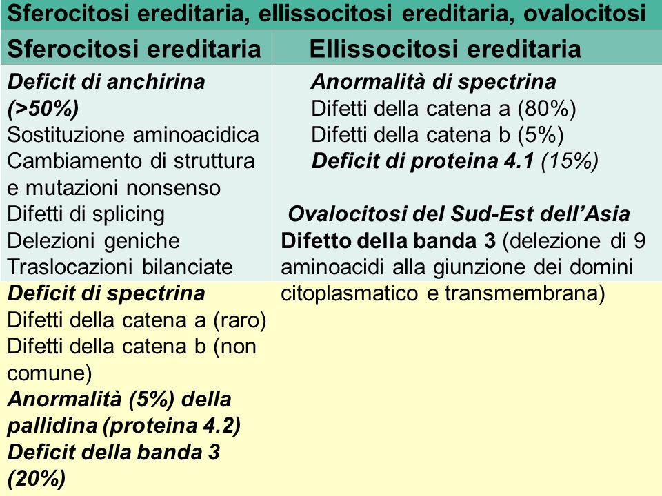 SFEROCITOSI EREDITARIA - Più frequente difetto di membrana - Autosomica dominante nel 75% dei casi - Nel 25% casi autosomica recessiva o dominante a penetranza incompleta o neomutazione - Deficit anchirina o spectrina o banda 3 o proteina 4.2