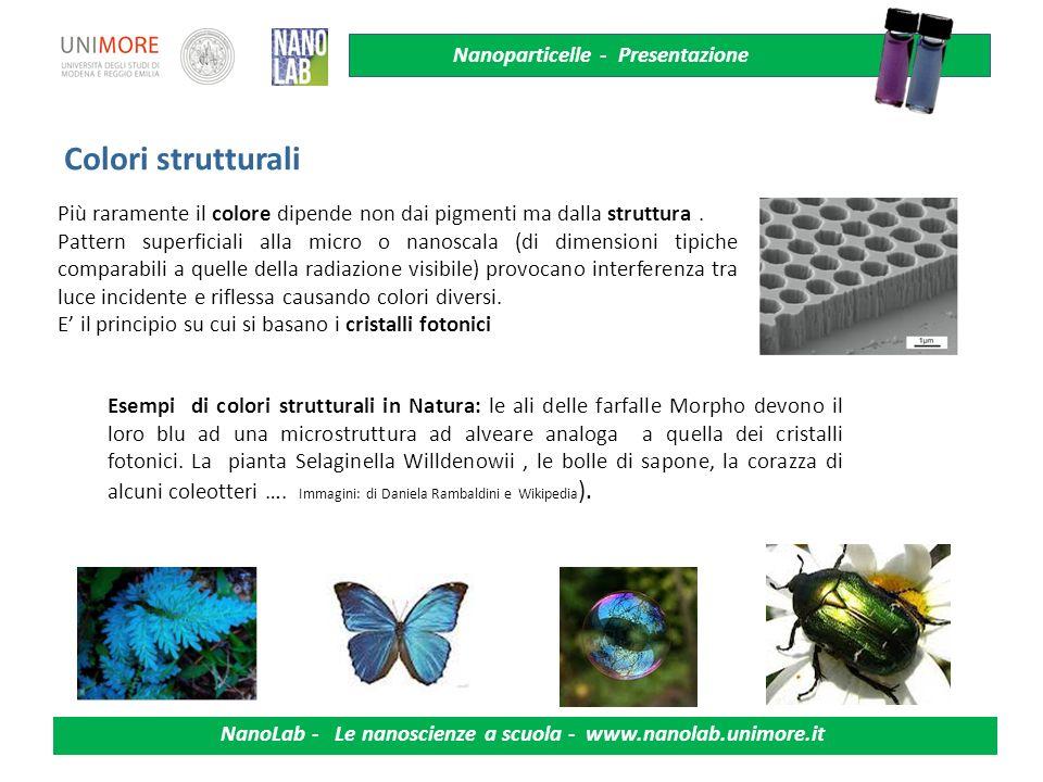 Nanoparticelle - Presentazione NanoLab - Le nanoscienze a scuola - www.nanolab.unimore.it Colori strutturali Più raramente il colore dipende non dai p