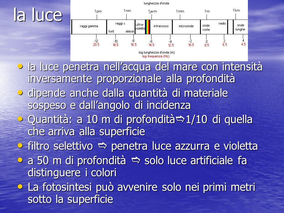 la luce penetra nellacqua del mare con intensità inversamente proporzionale alla profondità la luce penetra nellacqua del mare con intensità inversame