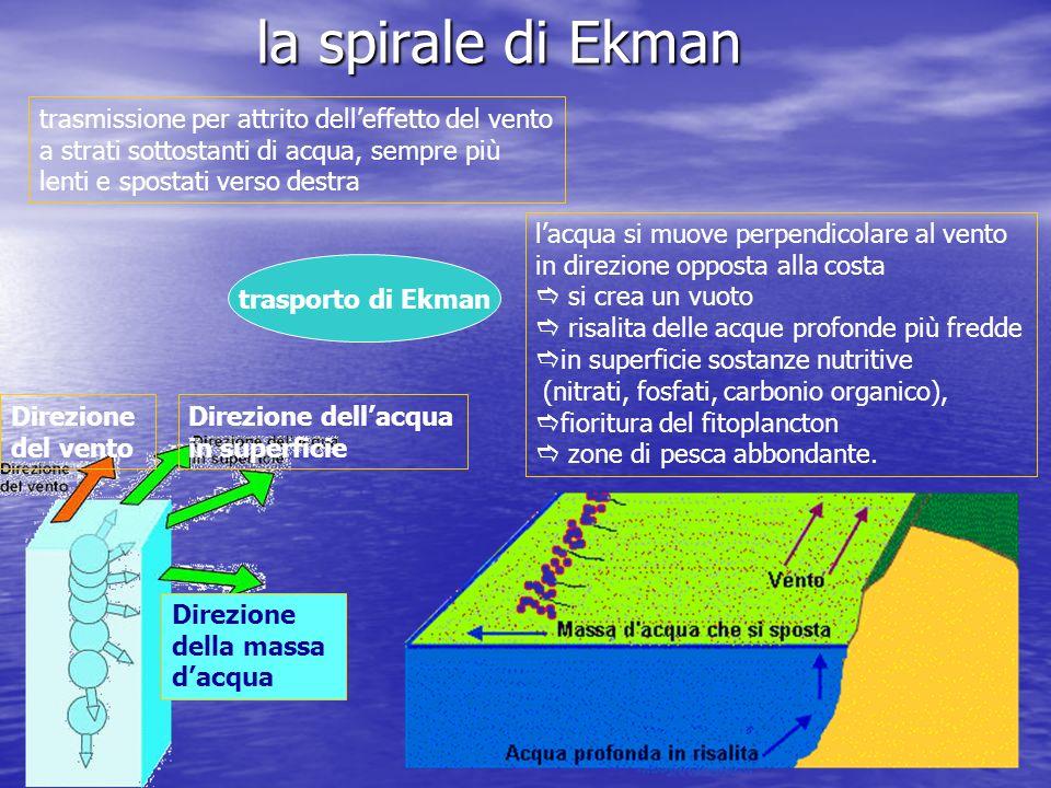 la spirale di Ekman Direzione del vento Direzione dellacqua in superficie Direzione della massa dacqua lacqua si muove perpendicolare al vento in dire