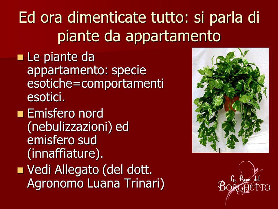 Ed ora dimenticate tutto: si parla di piante da appartamento Le piante da appartamento: specie esotiche=comportamenti esotici. Le piante da appartamen