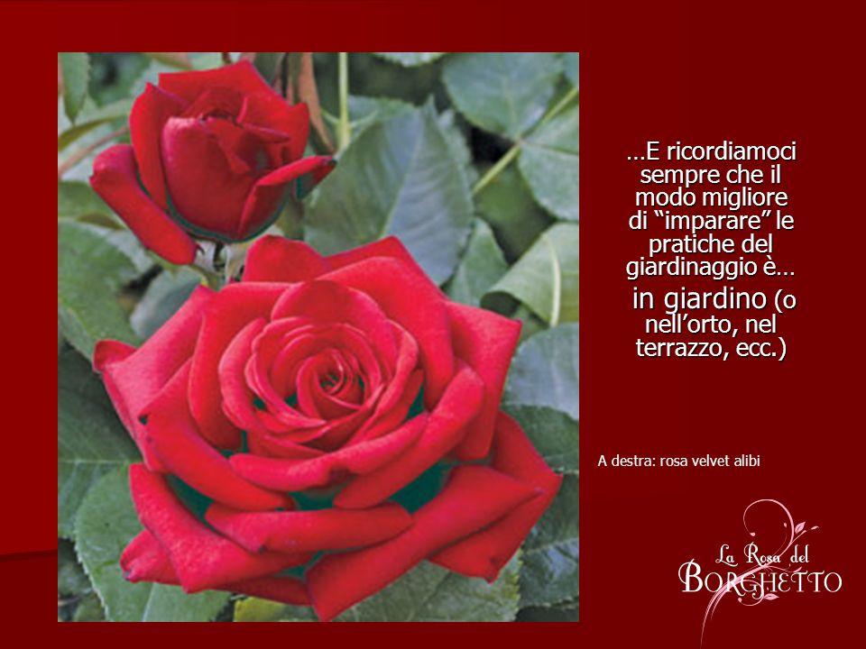 …E ricordiamoci sempre che il modo migliore di imparare le pratiche del giardinaggio è… in giardino (o nellorto, nel terrazzo, ecc.) in giardino (o ne