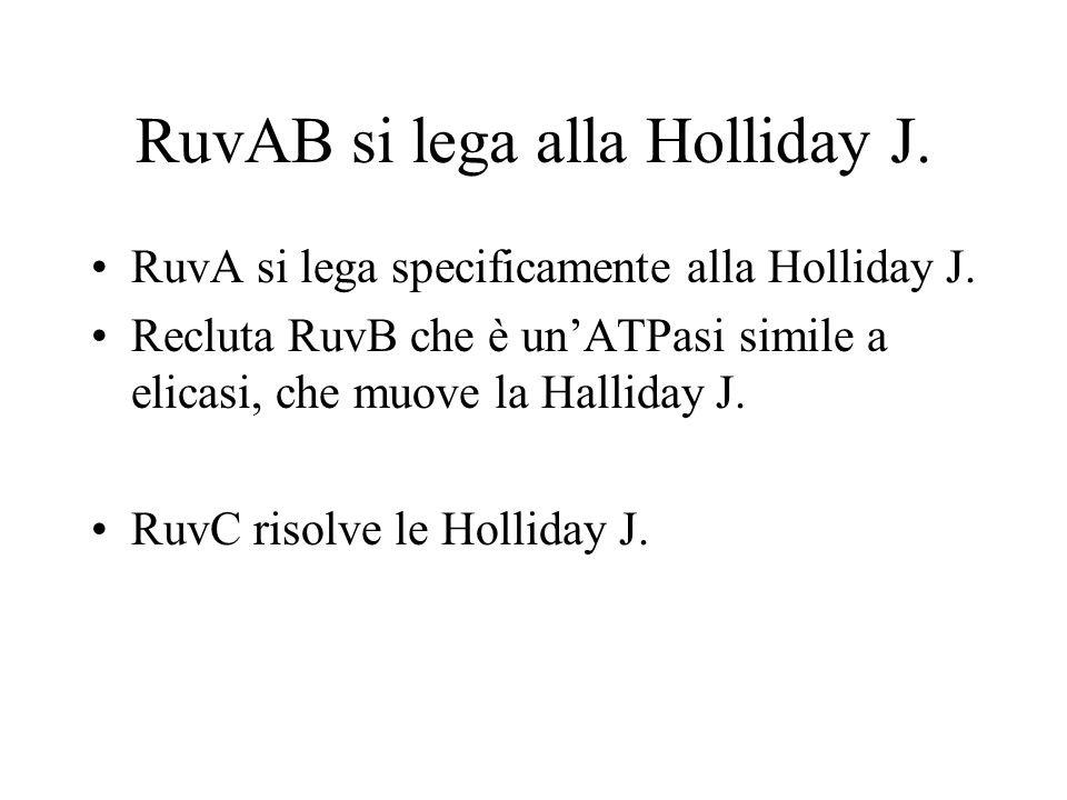 RuvAB si lega alla Holliday J. RuvA si lega specificamente alla Holliday J. Recluta RuvB che è unATPasi simile a elicasi, che muove la Halliday J. Ruv