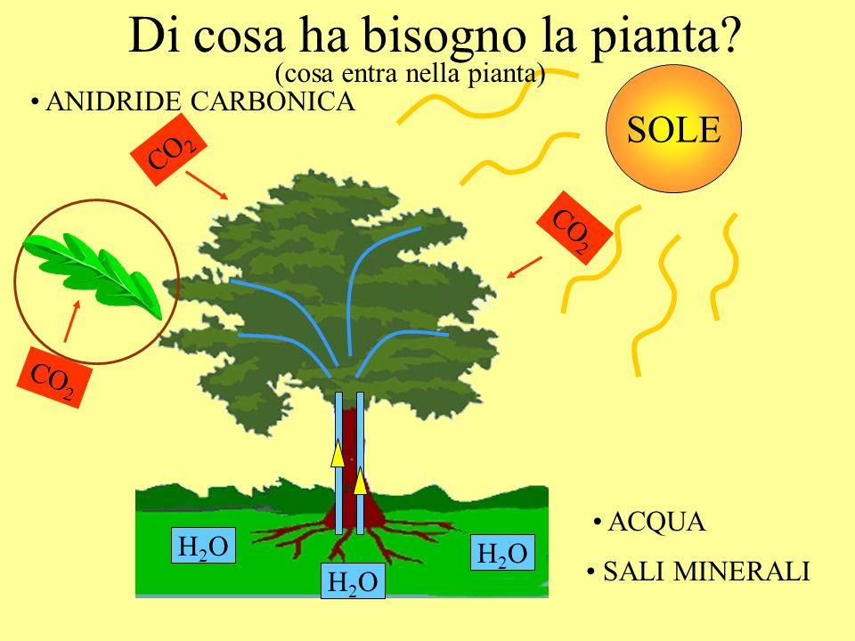Di cosa ha bisogno la pianta? H2OH2O H2OH2O H2OH2O ACQUA SALI MINERALI ANIDRIDE CARBONICA CO 2 SOLE (cosa entra nella pianta)