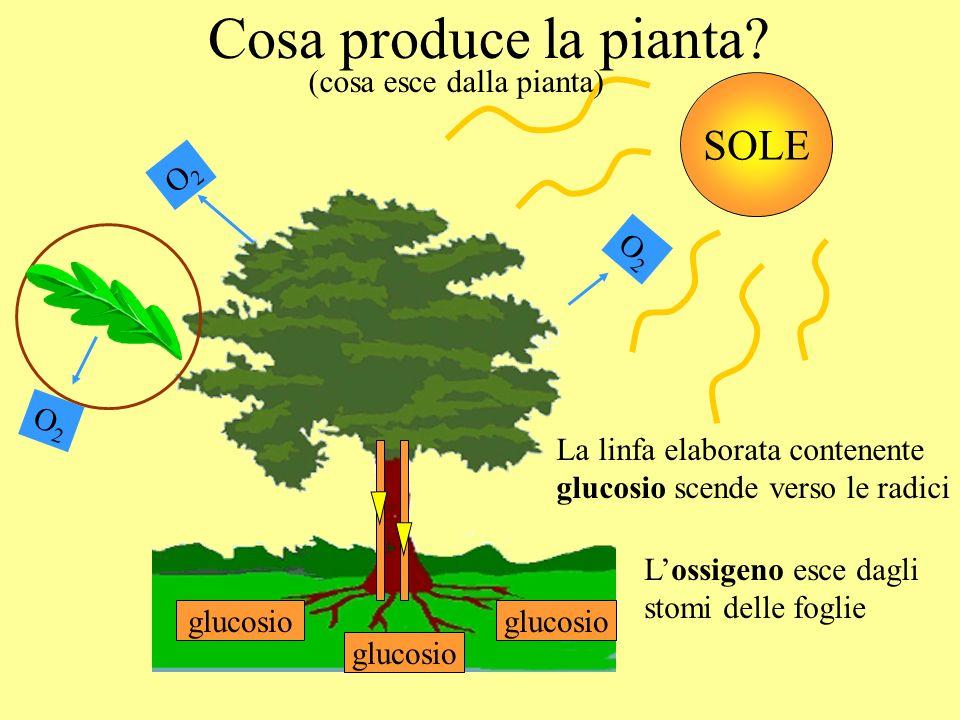 RIASSUMENDO : + SOLE O2O2 ossigeno ++ CO 2 anidride carbonica H2OH2O acqua