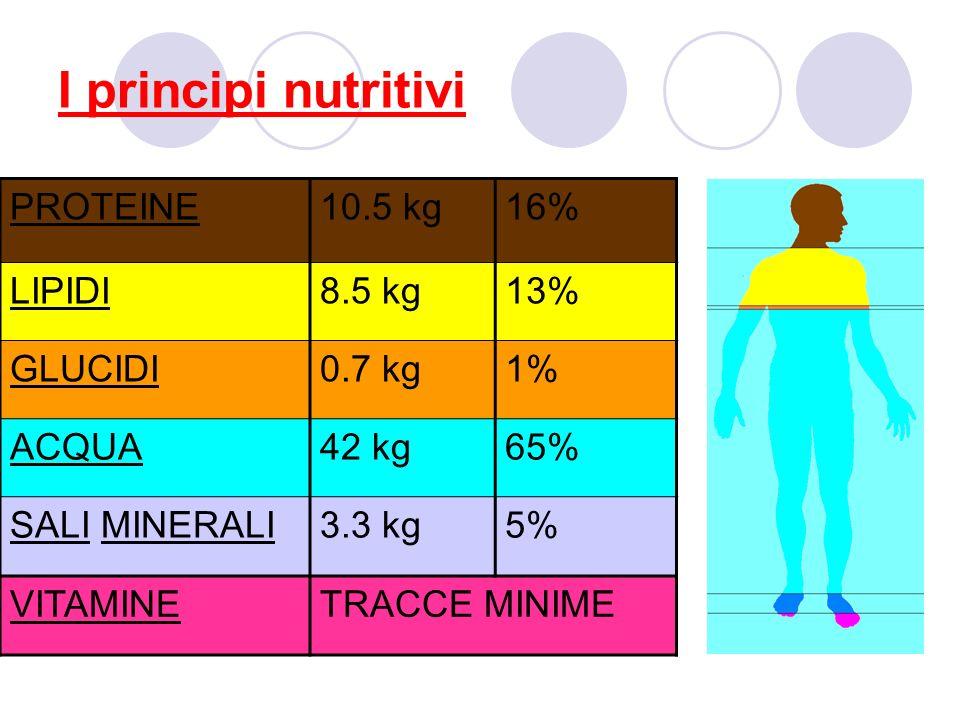 I principi nutritivi PROTEINE10.5 kg16% LIPIDI8.5 kg13% GLUCIDI0.7 kg1% ACQUA42 kg65% SALI MINERALI3.3 kg5% VITAMINETRACCE MINIME