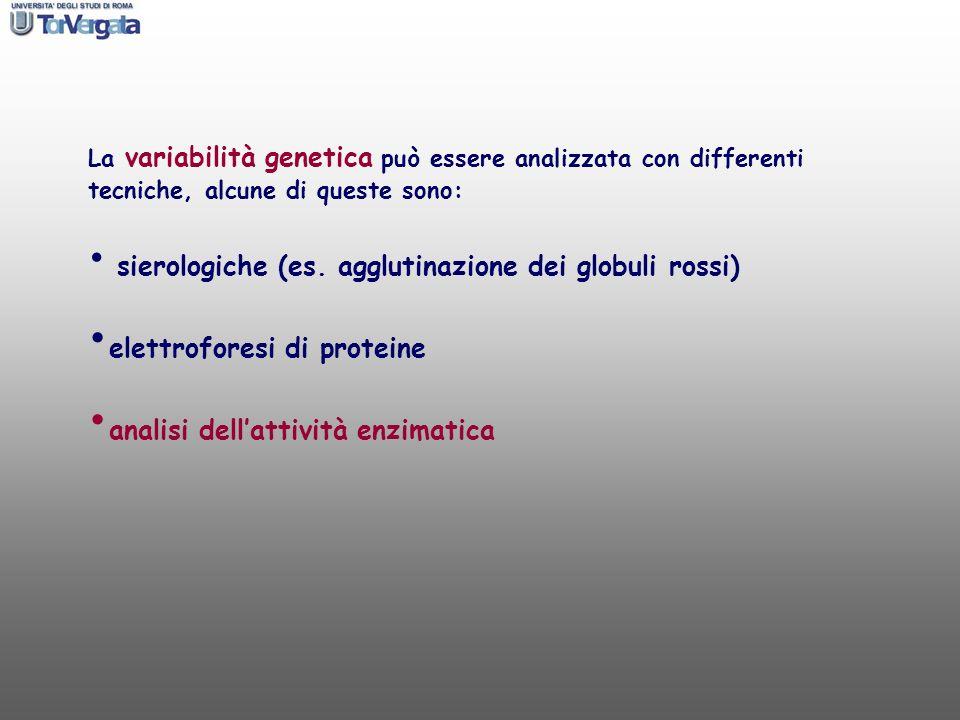 La variabilità genetica può essere analizzata con differenti tecniche, alcune di queste sono: sierologiche (es. agglutinazione dei globuli rossi) elet