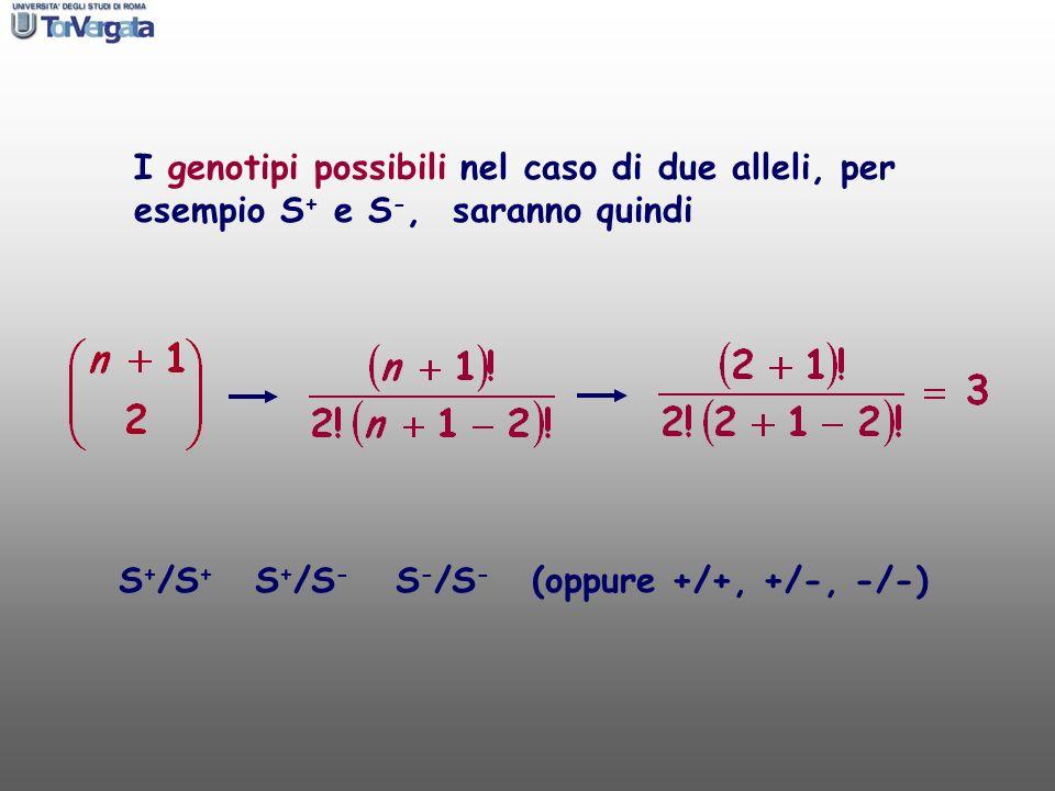 I genotipi possibili nel caso di due alleli, per esempio S + e S -, saranno quindi S + /S + S + /S - S - /S - (oppure +/+, +/-, -/-)