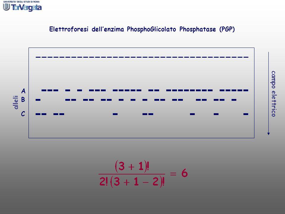 A B C campo elettrico alleli Elettroforesi dellenzima PhosphoGlicolato Phosphatase (PGP)