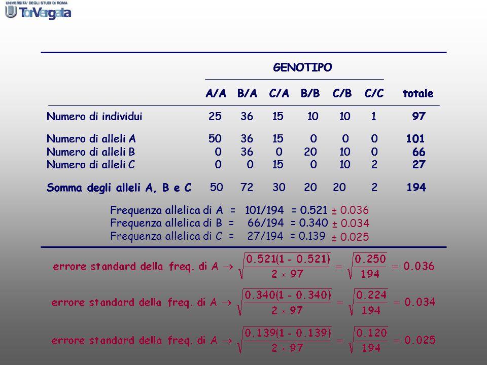 GENOTIPO A/AB/AC/AB/BC/BC/C totale Numero di individui 25 36 15 10 10 1 97 ± 0.034 ± 0.025 GENOTIPO A/AB/AC/AB/BC/BC/C totale Numero di individui 25 3