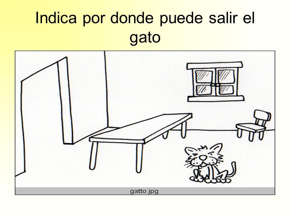 Indica por donde puede salir el gato