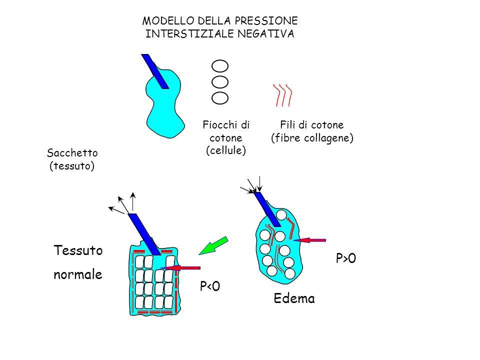 MODELLO DELLA PRESSIONE INTERSTIZIALE NEGATIVA Sacchetto (tessuto) Fiocchi di cotone (cellule) Fili di cotone (fibre collagene) Edema P>0 Tessuto norm