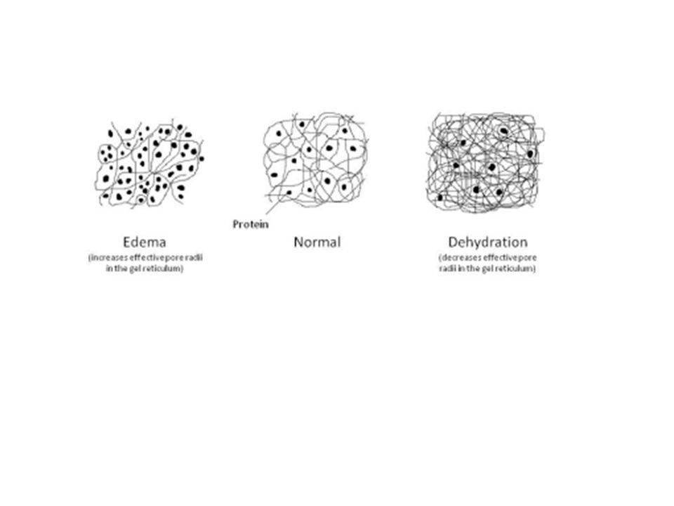 MODELLO DELLA PRESSIONE INTERSTIZIALE NEGATIVA Sacchetto (tessuto) Fiocchi di cotone (cellule) Fili di cotone (fibre collagene) Edema P>0 Tessuto normale P<0