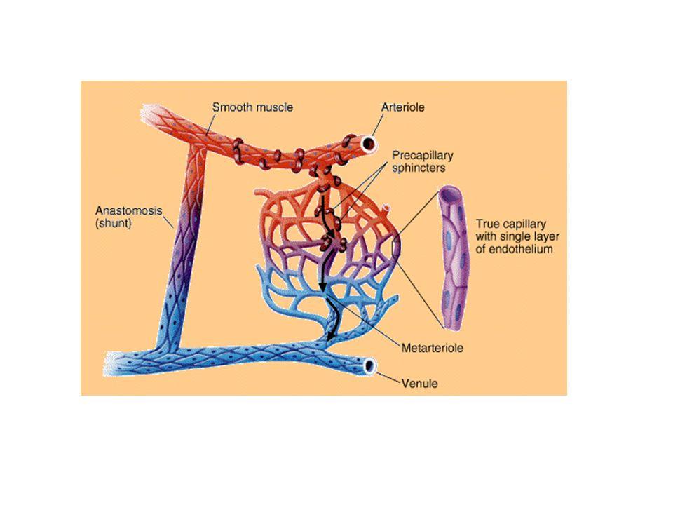 SISTEMA LINFATICO Cenni sulla composizione della linfa e sull anatomia del sistema: liquido interstiziale con aumentato contenuto proteico.