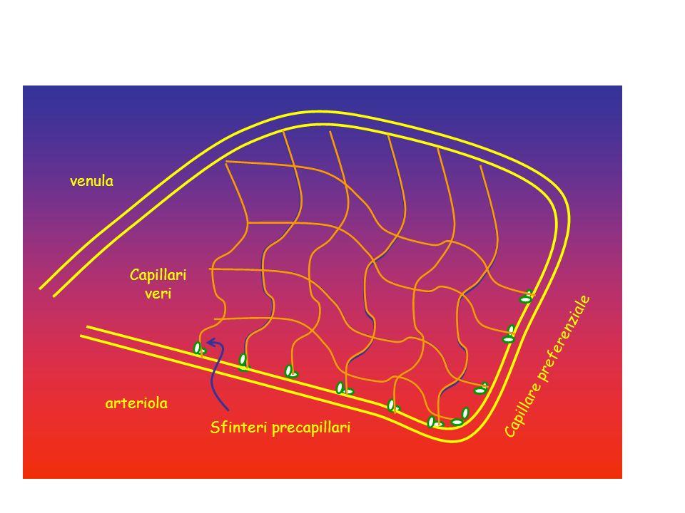 arteriola venula Sfinteri precapillari Capillare preferenziale Capillari veri