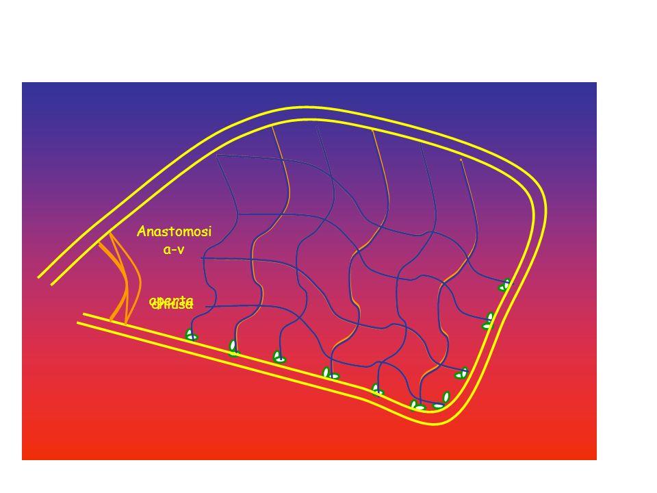 SCAMBIO TRANSCAPILLARE DIFFUSIONE: principale meccanismo per lo scambio di molecole.