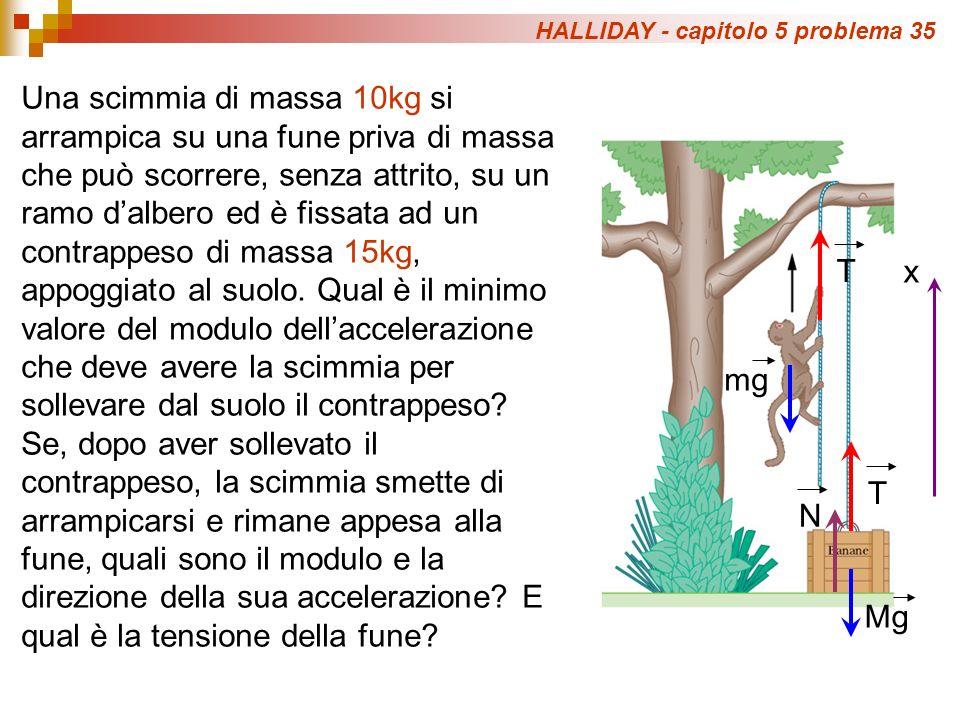HALLIDAY - capitolo 5 problema 35 Una scimmia di massa 10kg si arrampica su una fune priva di massa che può scorrere, senza attrito, su un ramo dalber