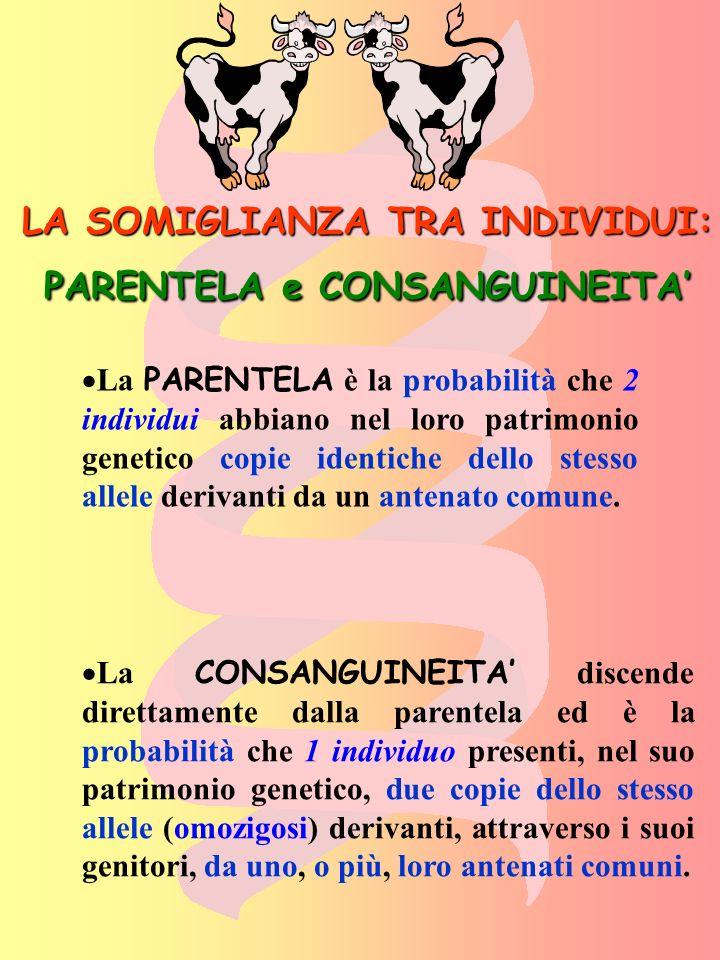 STIMA DEL COEFFICIENTE DI PARENTELA in cui: Rxy = coefficiente di parentela; n=numero di passaggi di pedigree che uniscono gli individui x ed y passando attraverso il loro comune antenato A.