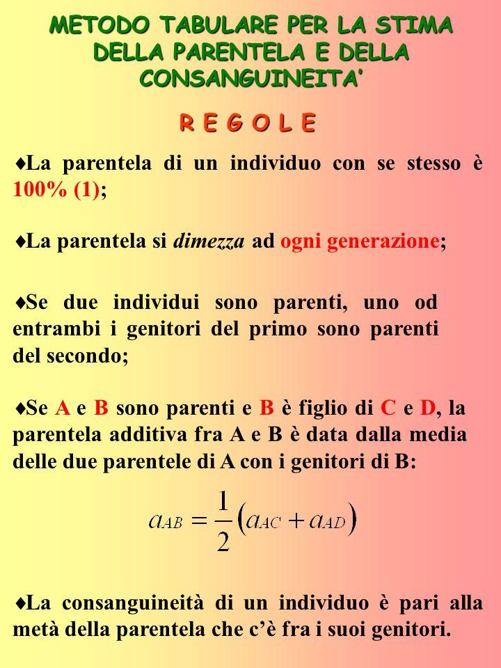 PEDIGREE DELLINDIVIDUO X P 1 4 2 3 1 6 M 1 5 2 3 7 8 X Diagramma a frecce relativo al pedigree dellindividuo X X P M 1 4 Ascendenza nota Più di un figlio