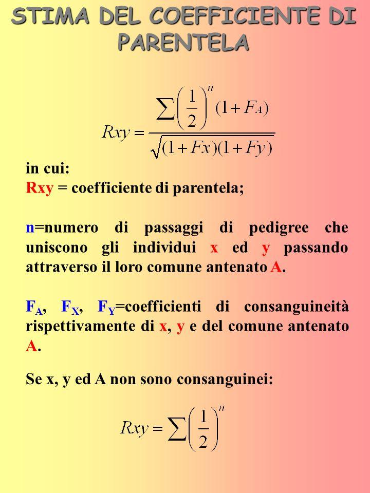 Alcuni dei più comuni coefficienti di parentela diretta Genitori Figli XP Nonni Nipoti XPA X P A B M
