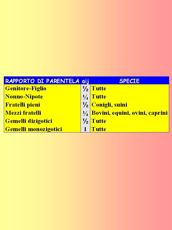 STIMA DEL COEFFICIENTE DI CONSANGUINEITA in cui: F X = coefficiente di consanguineità; n=numero di passaggi di pedigree tra il padre e la madre di X attraverso il loro comune antenato A.