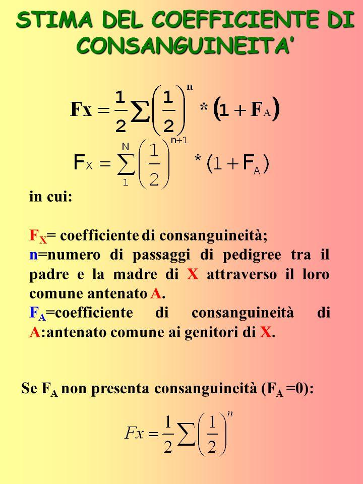 Alcuni dei più comuni coefficienti di consanguineità Accoppiamento tra mezzi fratelli X P M 1 2 1 3 X P M 1