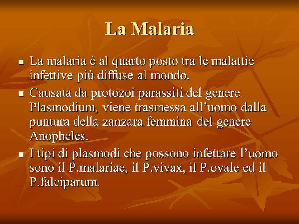 La Malaria La malaria è al quarto posto tra le malattie infettive più diffuse al mondo. La malaria è al quarto posto tra le malattie infettive più dif