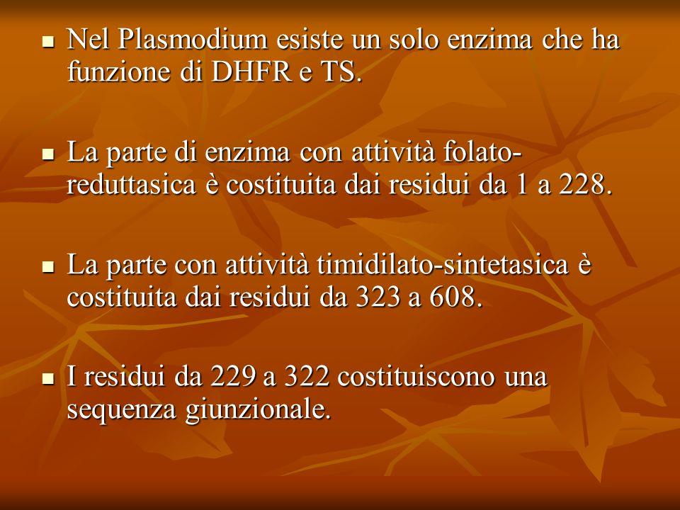 Nel Plasmodium esiste un solo enzima che ha funzione di DHFR e TS. Nel Plasmodium esiste un solo enzima che ha funzione di DHFR e TS. La parte di enzi