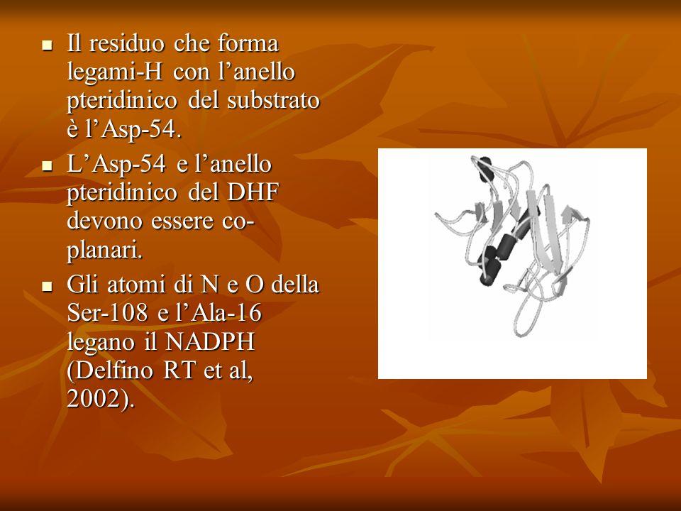 Il residuo che forma legami-H con lanello pteridinico del substrato è lAsp-54. Il residuo che forma legami-H con lanello pteridinico del substrato è l