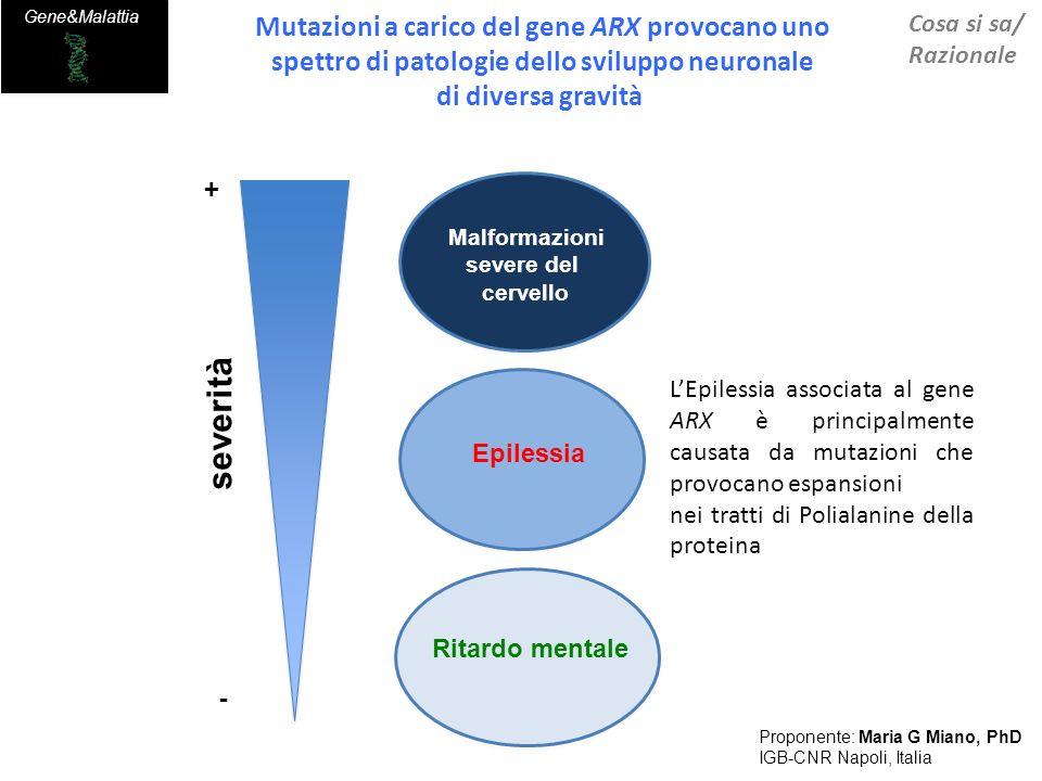 BD1 BD2 KDM5C ARX ON Differentiation&Maturation ARX chromatin packaging KDM5C H3K4me3 neuronal precursors Regulation of target genes Phenotypic severity Transactivation (% WT) WT ARX 100 80 60 40 normal variable severevery severe p.Ala148_Ala155dup p.Gly143_Ala153dup p.Ala109_Ala115dup p.Ala147_Ala155dup p.Ala105_Ala115dup Gene disease Card Risultati prodotti-1 Proponente: Maria G Miano, PhD IGB-CNR Napoli, Italia 1.