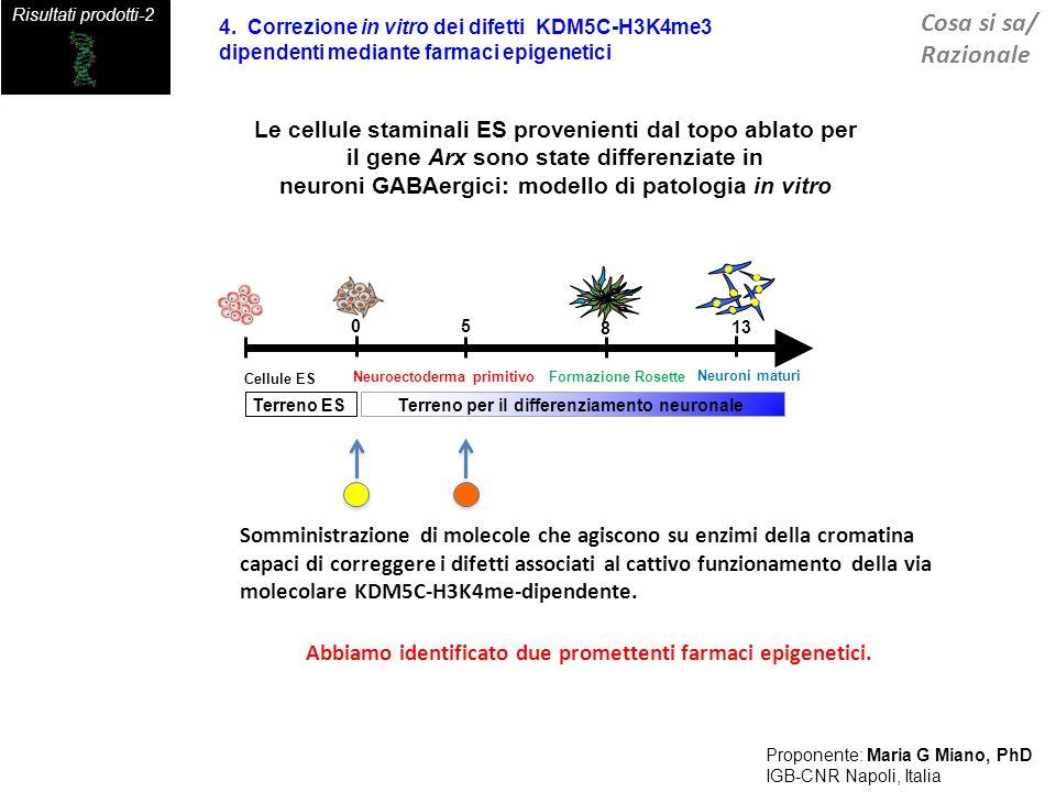 Gene disease Card Proposta Ipotesi Identificazione di nuovi bersagli terapeutici per il trattamento dellEpilessia farmaco-resistente associata al gene ARX Proponente: Maria G Miano, PhD IGB-CNR Napoli, Italia Le modificazioni epigenetiche sono reversibili: Proponiamo di eseguire una correzione in vivo dei difetti KDM5C-H3K4me3 mediante la somministrazione di farmaci epigenetici adatti a compensare la drastica riduzione della proteina KDM5C, regolatore dello stato di condensazione della cromatina ARX Impachettamento della cromatina KDM5C H3K4me3 Regolazione dellespressione di geni neuronali bersaglio Farmaci Epigenetici identificati In rosso= defetti epigenetici in analisi successivamente alla somministrazione di farmaci epigenetici