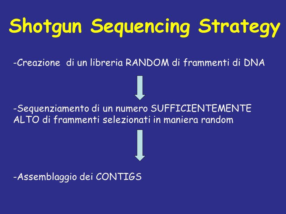 Shotgun Sequencing Strategy -Creazione di un libreria RANDOM di frammenti di DNA -Sequenziamento di un numero SUFFICIENTEMENTE ALTO di frammenti selez