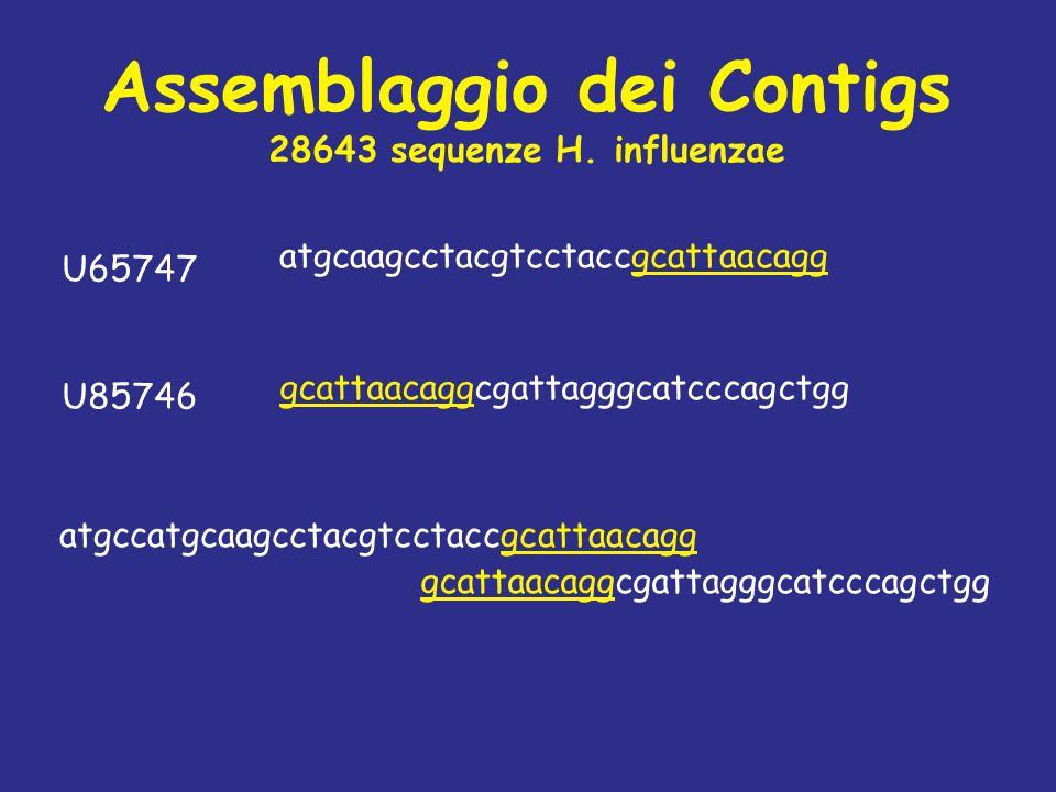 atgcaagcctacgtcctaccgcattaacagg U65747 U85746 gcattaacaggcgattagggcatcccagctgg atgccatgcaagcctacgtcctaccgcattaacagg gcattaacaggcgattagggcatcccagctgg A