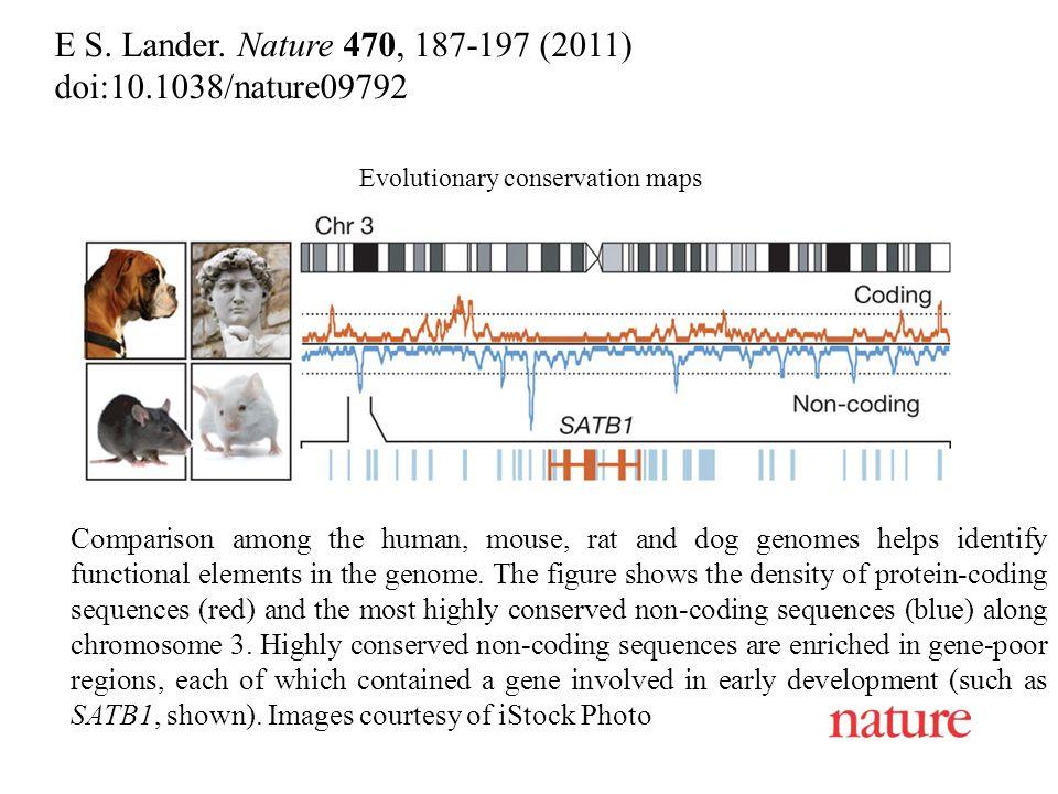 E S. Lander. Nature 470, 187-197 (2011) doi:10.1038/nature09792 Evolutionary conservation maps Comparison among the human, mouse, rat and dog genomes