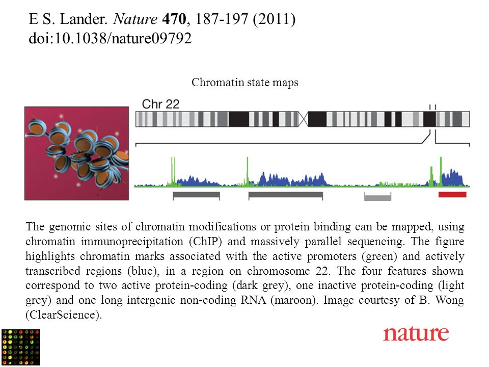 E S. Lander. Nature 470, 187-197 (2011) doi:10.1038/nature09792 Chromatin state maps The genomic sites of chromatin modifications or protein binding c