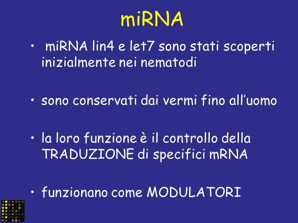 miRNA miRNA lin4 e let7 sono stati scoperti inizialmente nei nematodi sono conservati dai vermi fino alluomo la loro funzione è il controllo della TRA