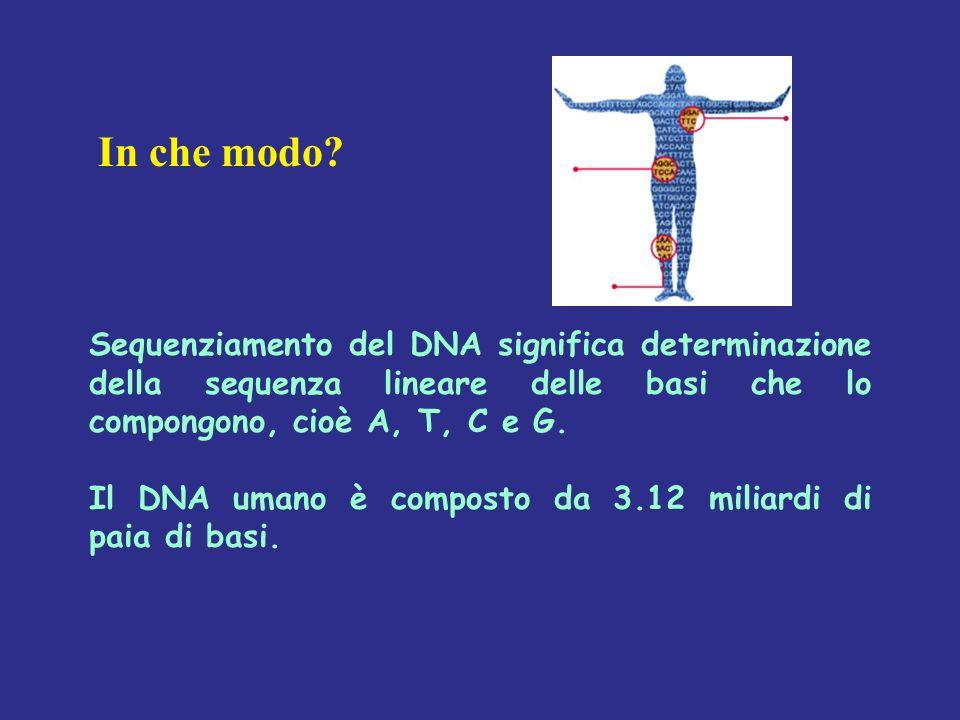 Gene30.000.(30.000-100.000) mRNA precursore proteico 150.000?.