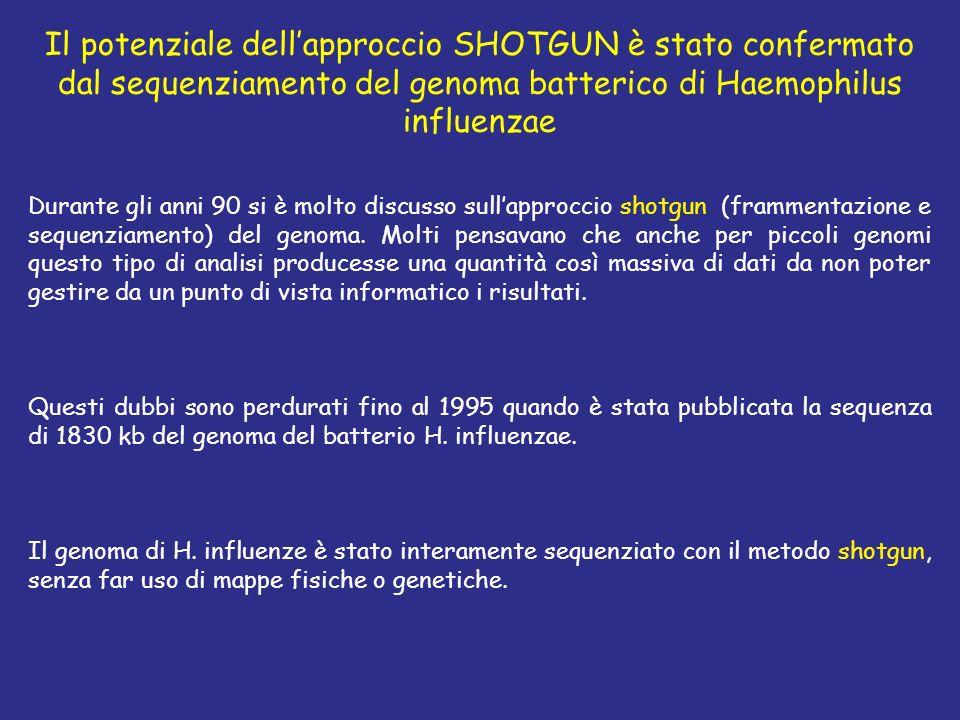 Il potenziale dellapproccio SHOTGUN è stato confermato dal sequenziamento del genoma batterico di Haemophilus influenzae Durante gli anni 90 si è molt