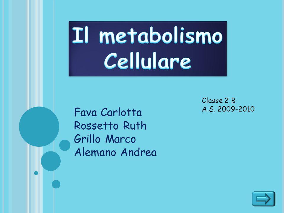 Fava Carlotta Rossetto Ruth Grillo Marco Alemano Andrea Classe 2 B A.S. 2009-2010